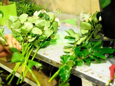 Gouttebroze Fleurs - ACTIF ASTRÉE-